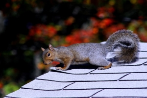 Squirrel Sitting On Roof